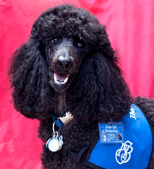 Therapy Dog Shadow Caregiver